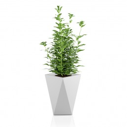 vaso green